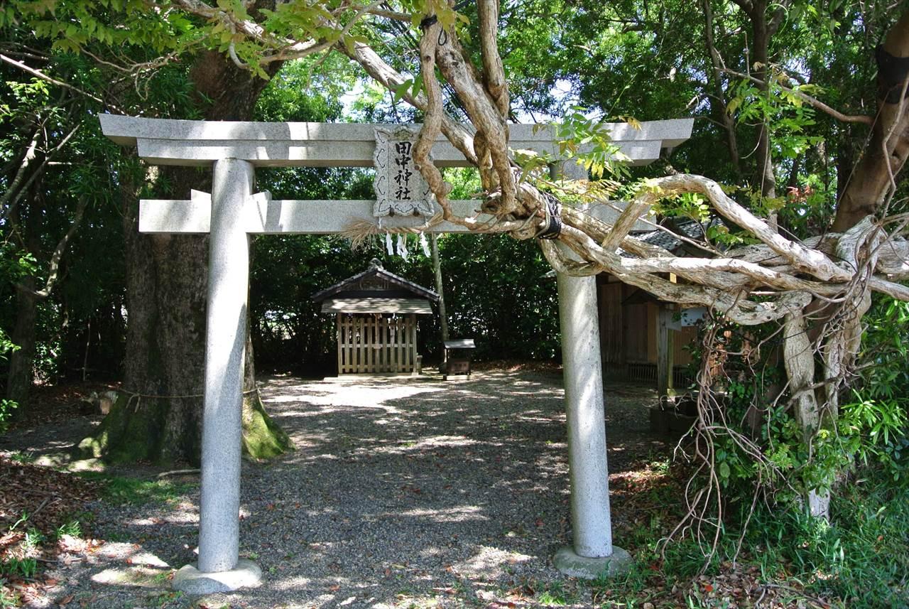 田中神社のオカフジ