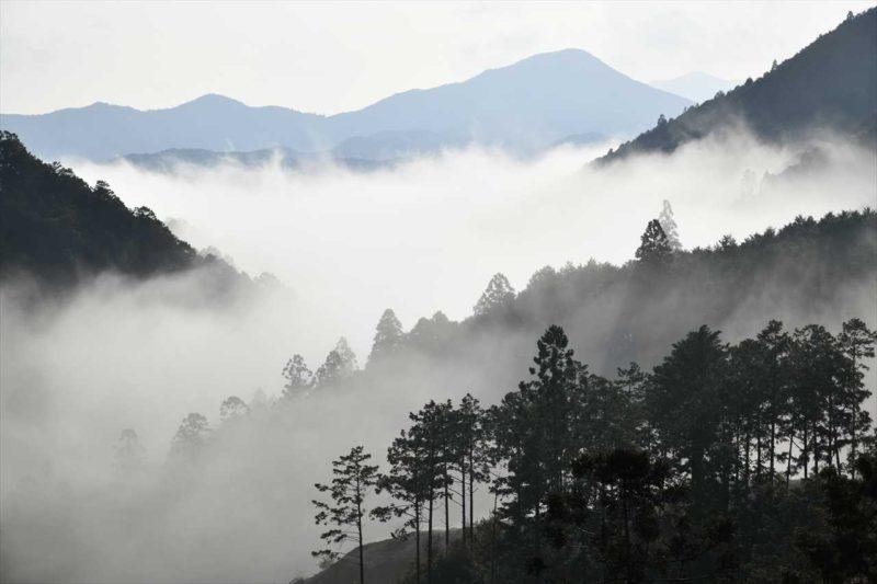 本宮の朝霧