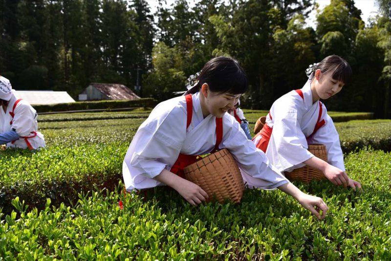 音無茶の新茶祭