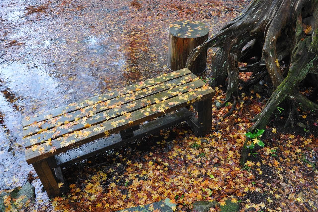 雨の近露王子紅葉