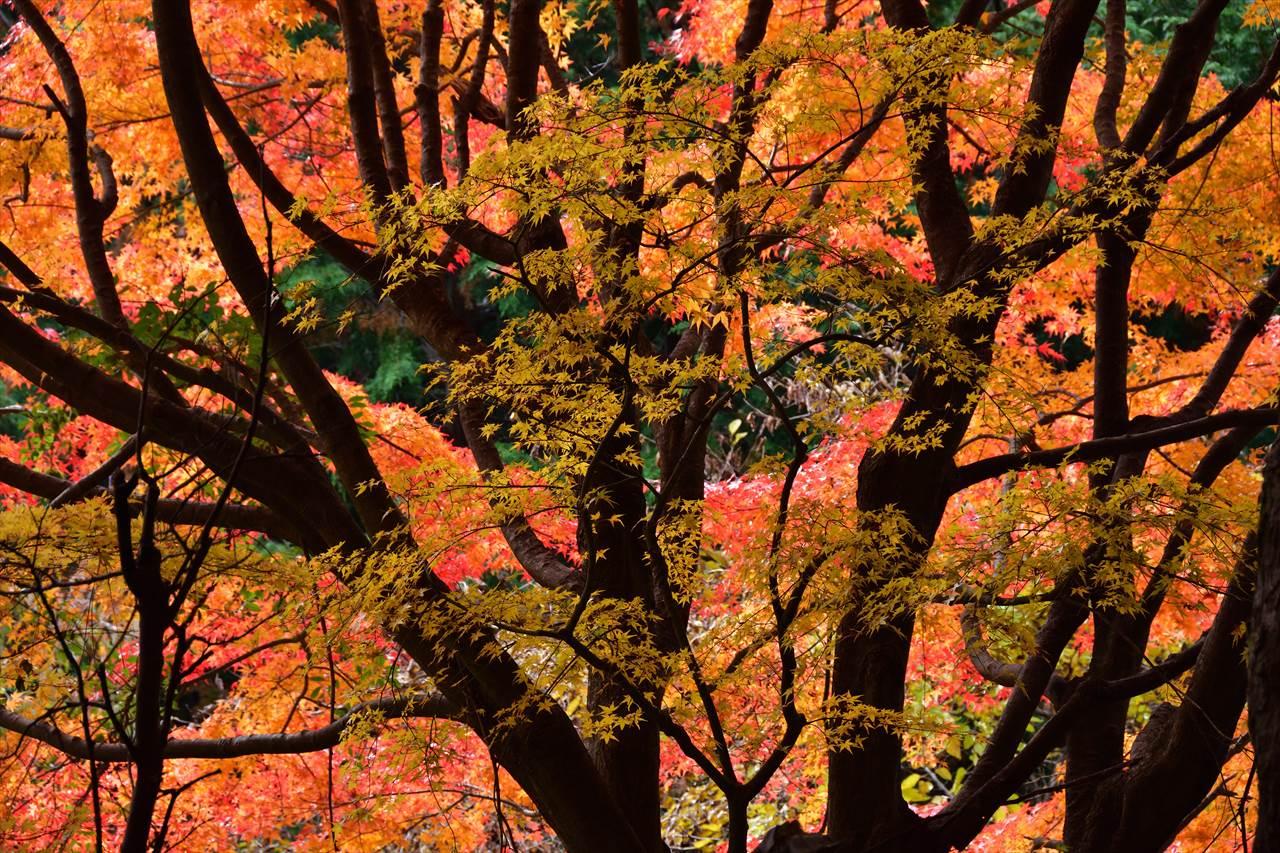 高原の紅葉