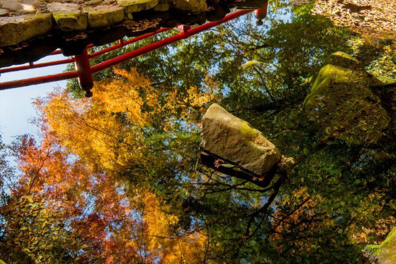 野中の清水の紅葉