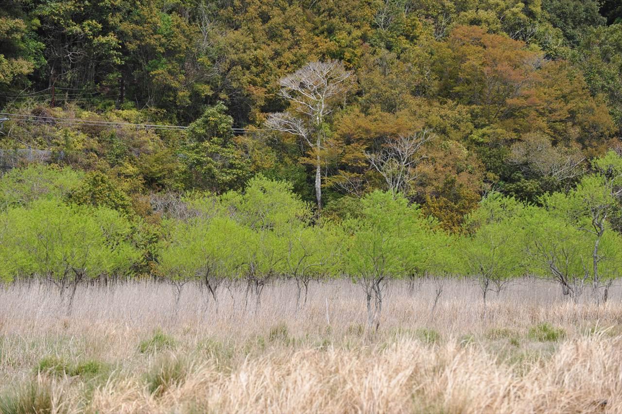 田原湿地の春