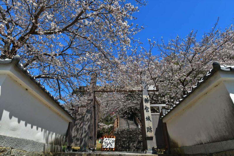 新宮城跡の桜