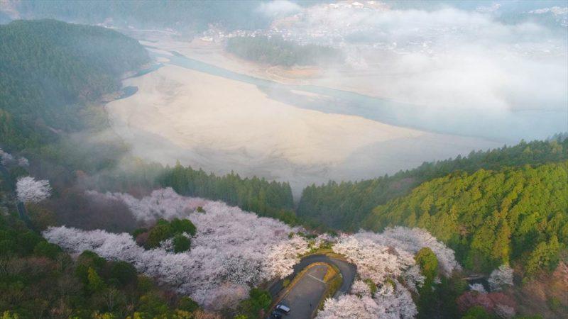 田辺市140 七越峯の桜