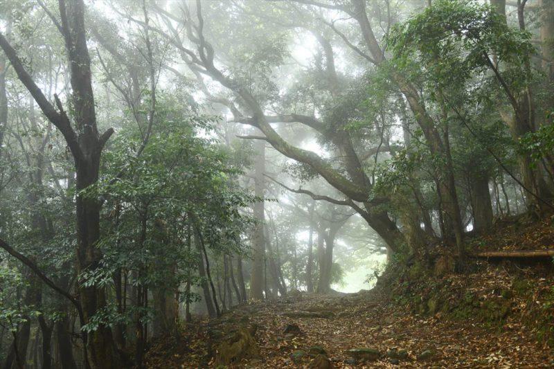 霧のかけぬけ道