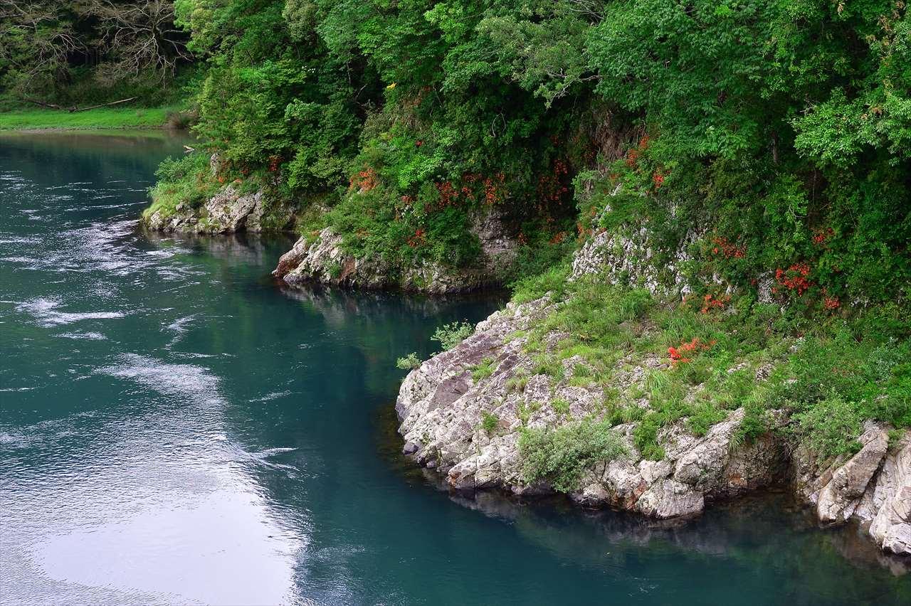 日置川のサツキ