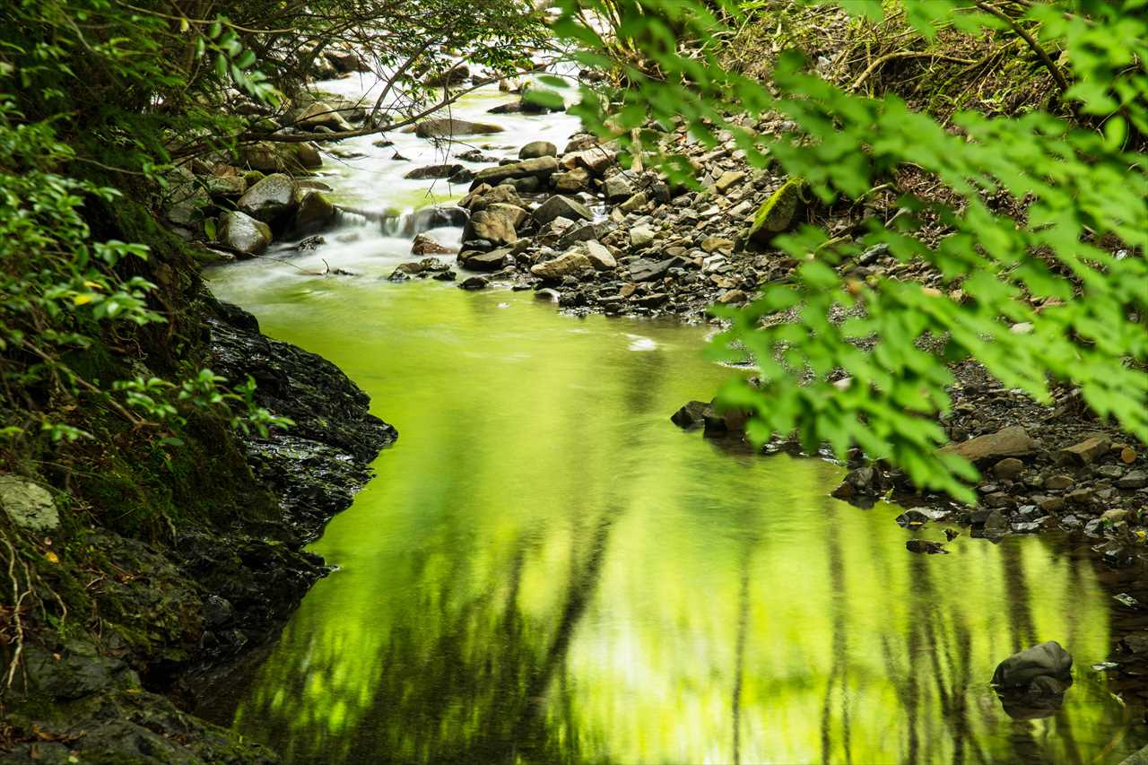 渓流の輝き